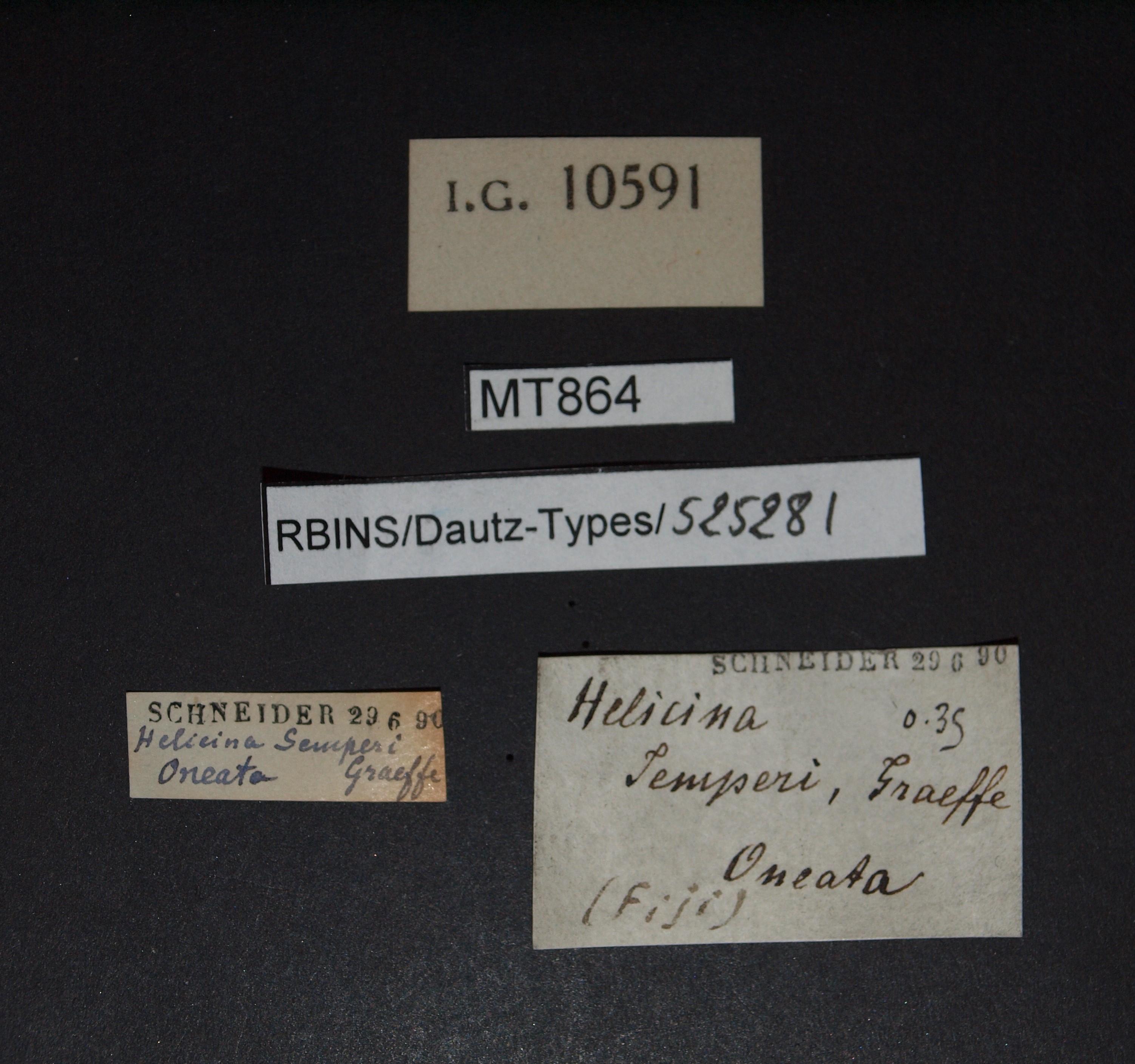 BE-RBINS-INV MT 864 Helicina semperi pt Lb.jpg