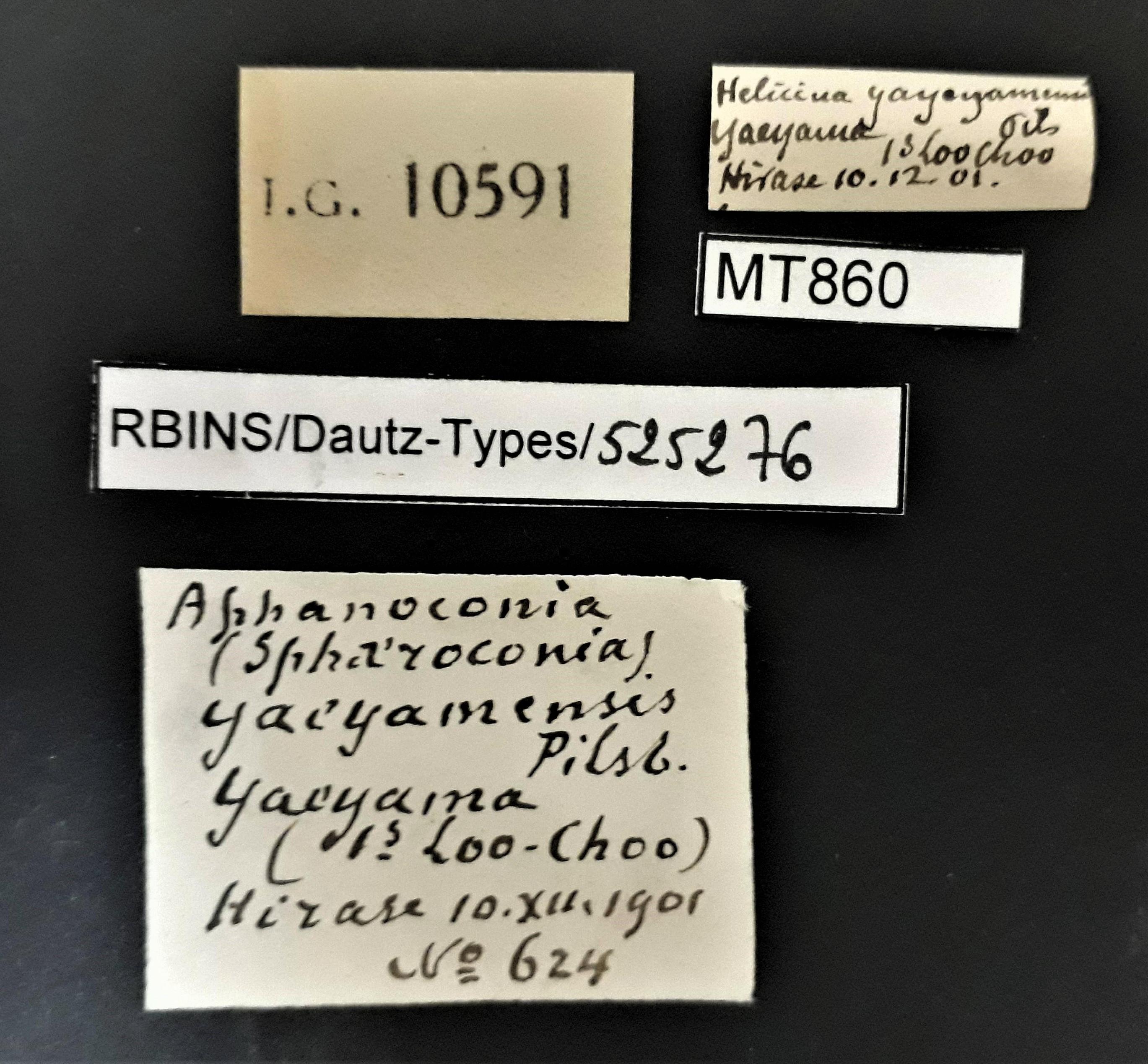 BE-RBINS-INV MT 860 Helicina yaeyamensis pt Lb.jpg