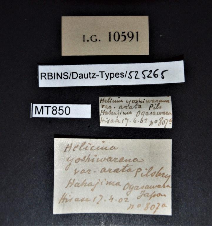 BE-RBINS-INV PARATYPE MT 850 Helicina yoshiwarana var. arata LABELS.jpg