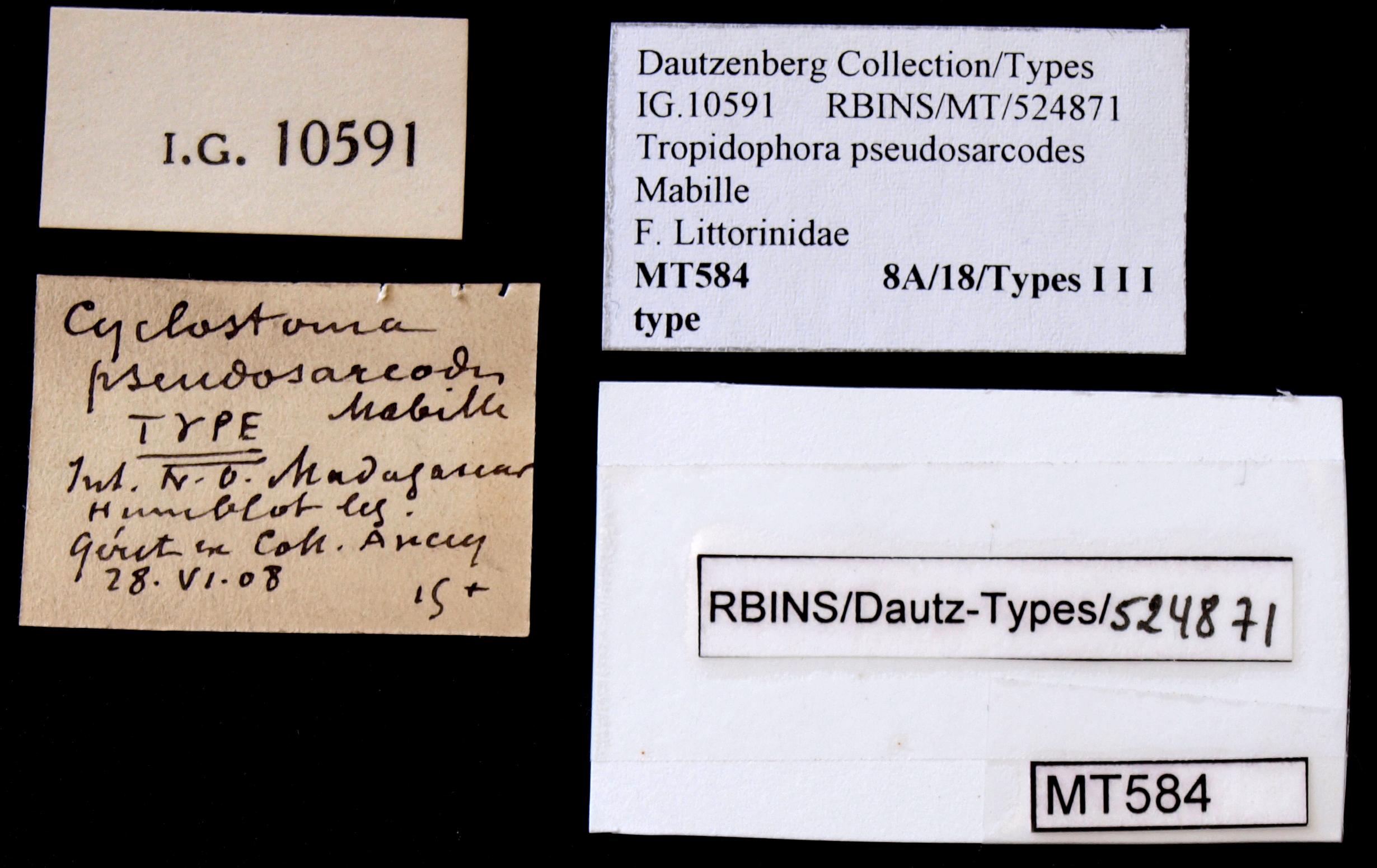 0584 Tropidophora pseudosarcodes Typ Lb.JPG