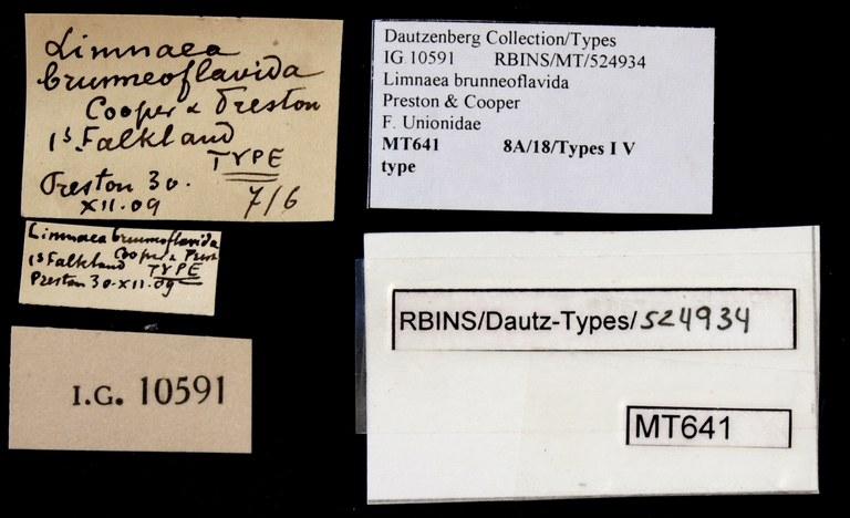 BE-RBINS-INV TYPE MT 641 Limnaea brunneoflavida LABELS.jpg