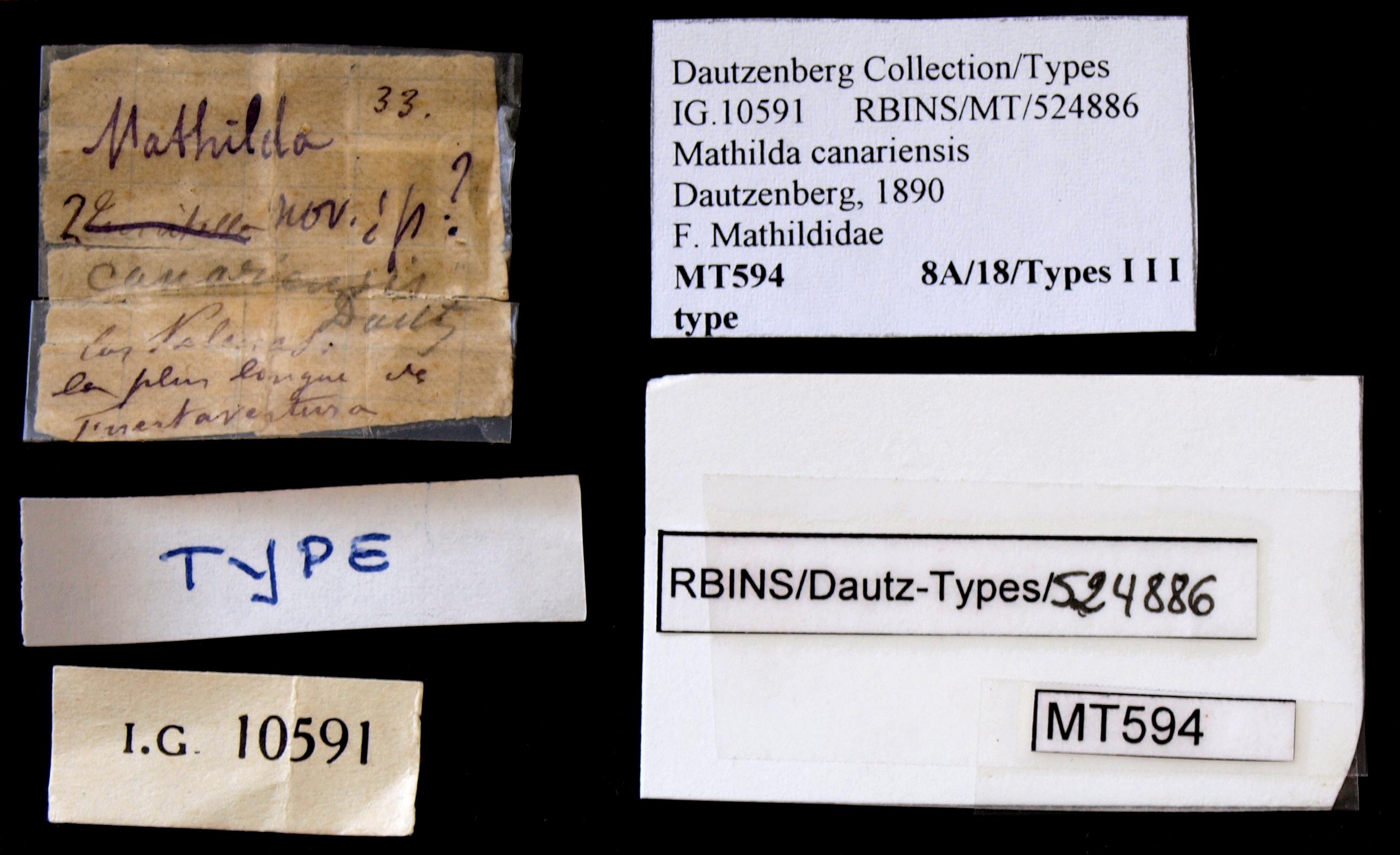 BE-RBINS-INV TYPE MT 594 Mathilda canariensis LABELS.jpg