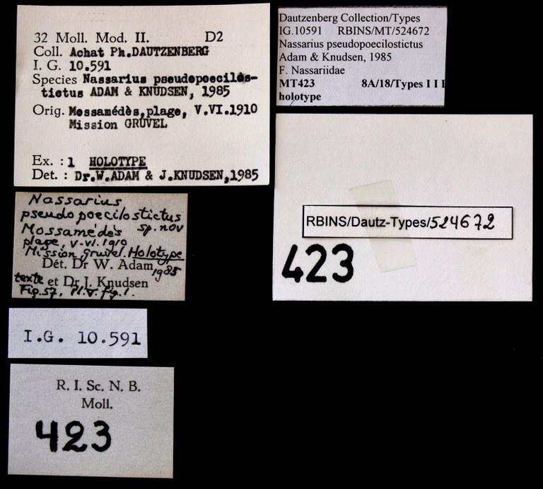 BE-RBINS-INV HOLOTYPE MT 423 Nassarius pseudopoecilostictus LABELS.jpg