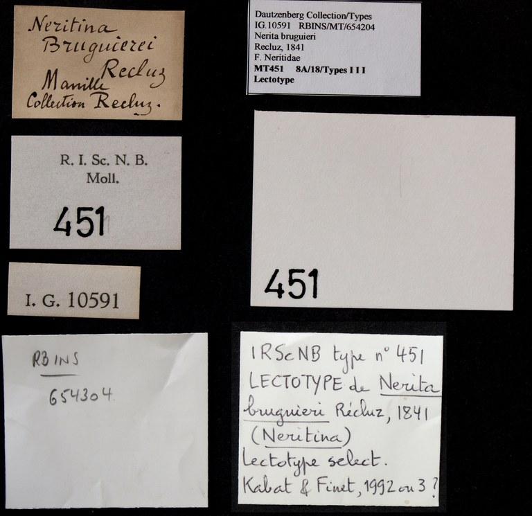 BE-RBINS-INV LECTOTYPE MT 451 Nerita burguieri LABELS.jpg