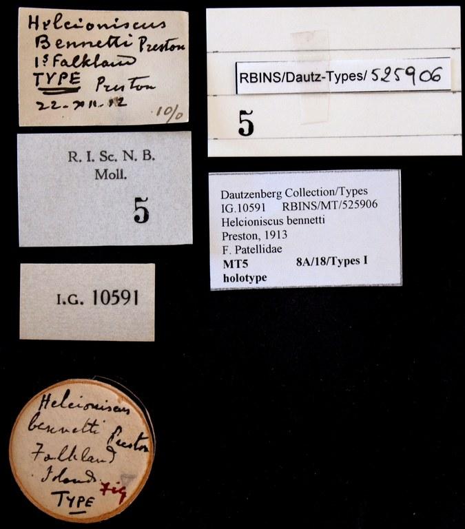 BE-RBINS-INV HOLOTYPE MT 5 Helcioniscus bennetti labels.jpg