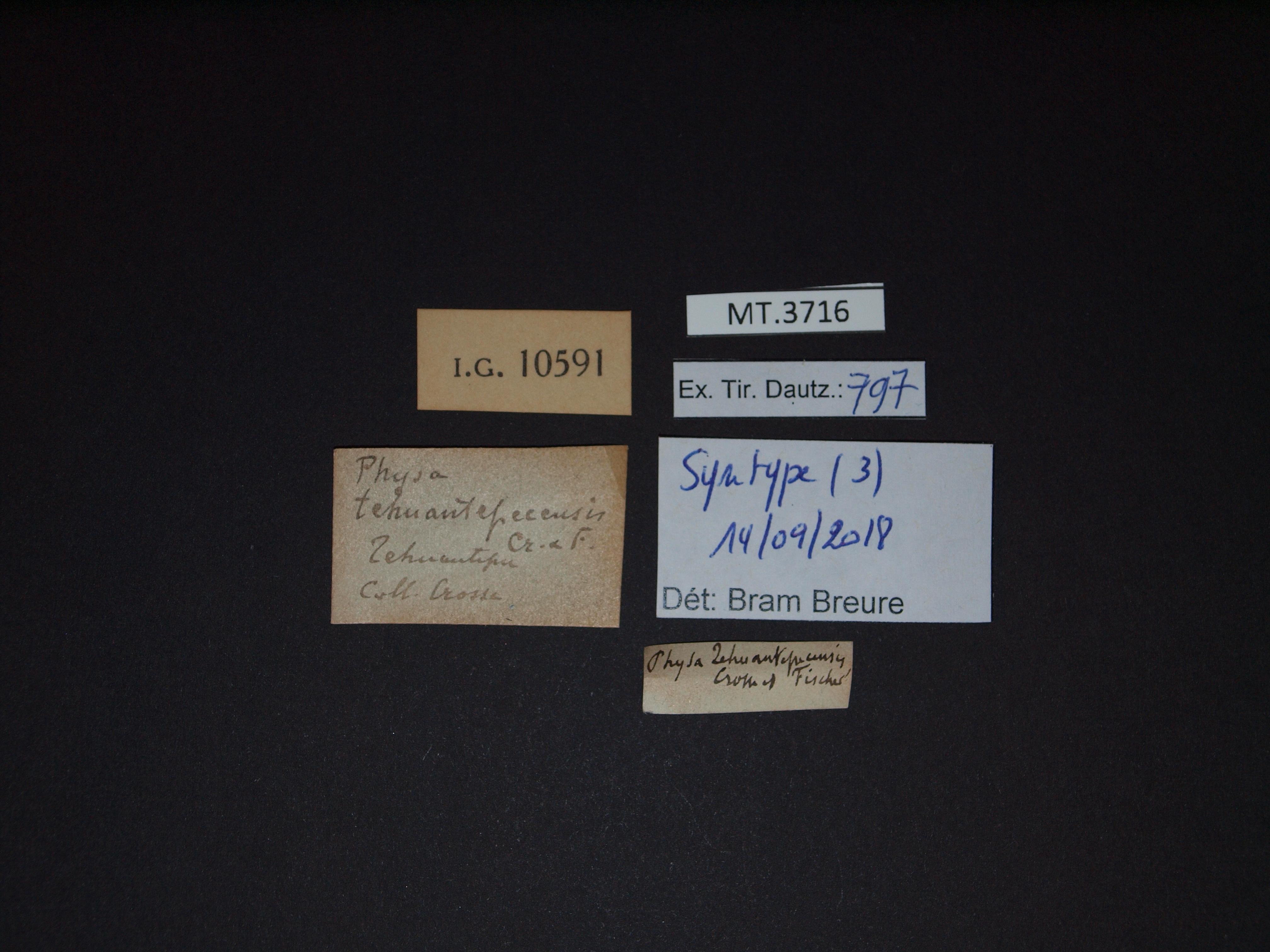 BE-RBINS-INV MT.3716 Physa tehuantepecensis st Lb.jpg