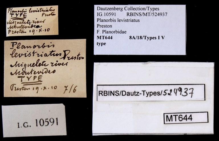 BE-RBINS-INV TYPE MT 644 Planorbis levistriatus LABELS.jpg