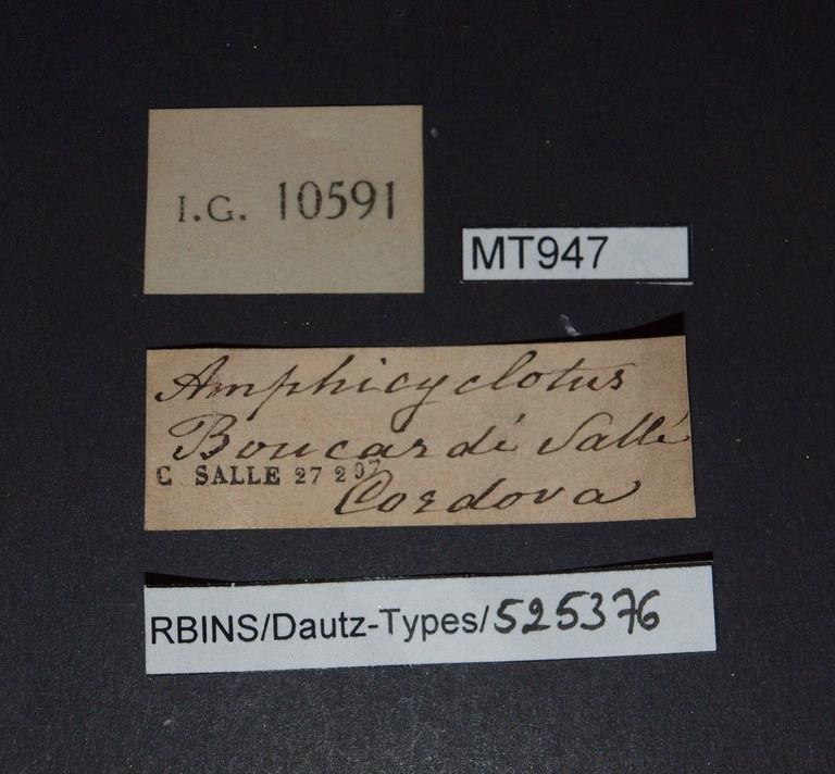 BE-RBINS-INV PARATYPE MT 947 Amphicyclotus boucardi LABELS.jpg