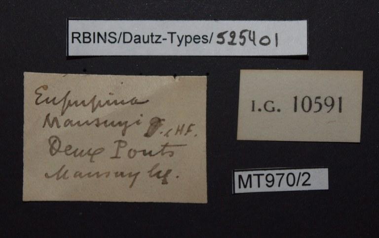 BE-RBINS-INV PARATYPE MT.970/2 Eupupina mansuyi LABELS.jpg