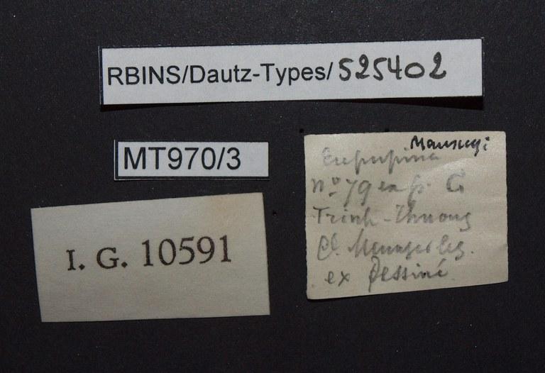 BE-RBINS-INV PARATYPE MT.970/3 Eupupina mansuyi LABELS.jpg