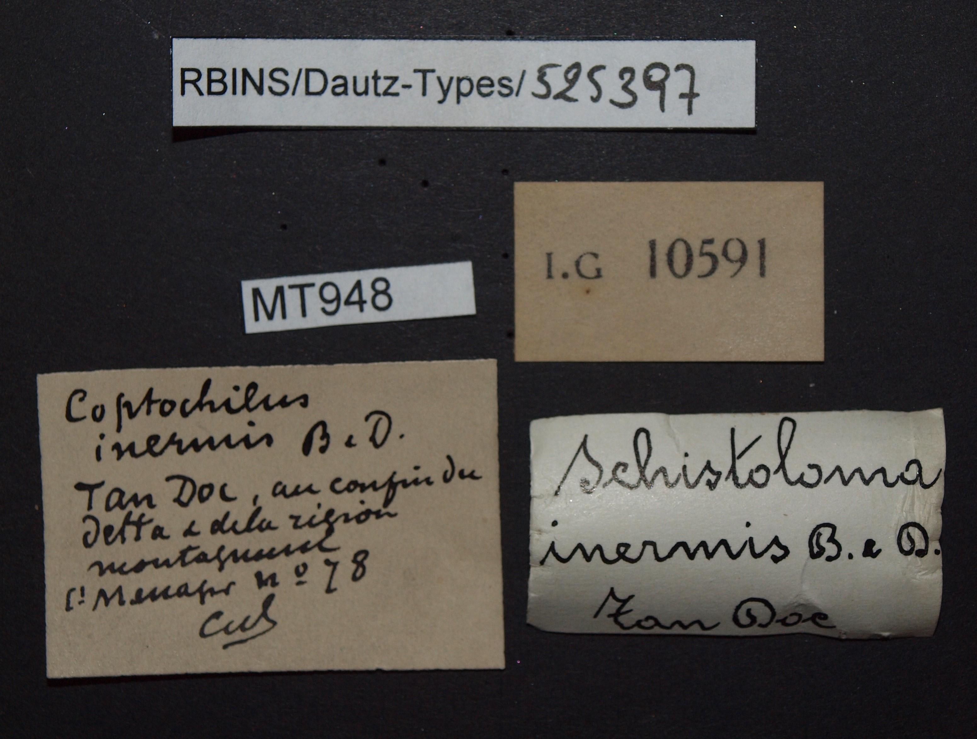 BE-RBINS-INV MT 948 Coptocheilus inermis pt Lb.JPG