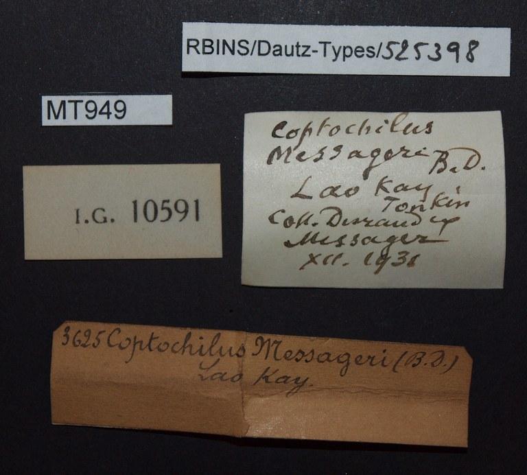 BE-RBINS-INV PARATYPE MT 949 Coptocheilus messageri LABELS.jpg
