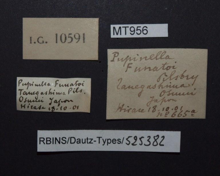 BE-RBINS-INV PARATYPE MT 956 Pupinella (Pupinopsis) funatoi LABELS.jpg