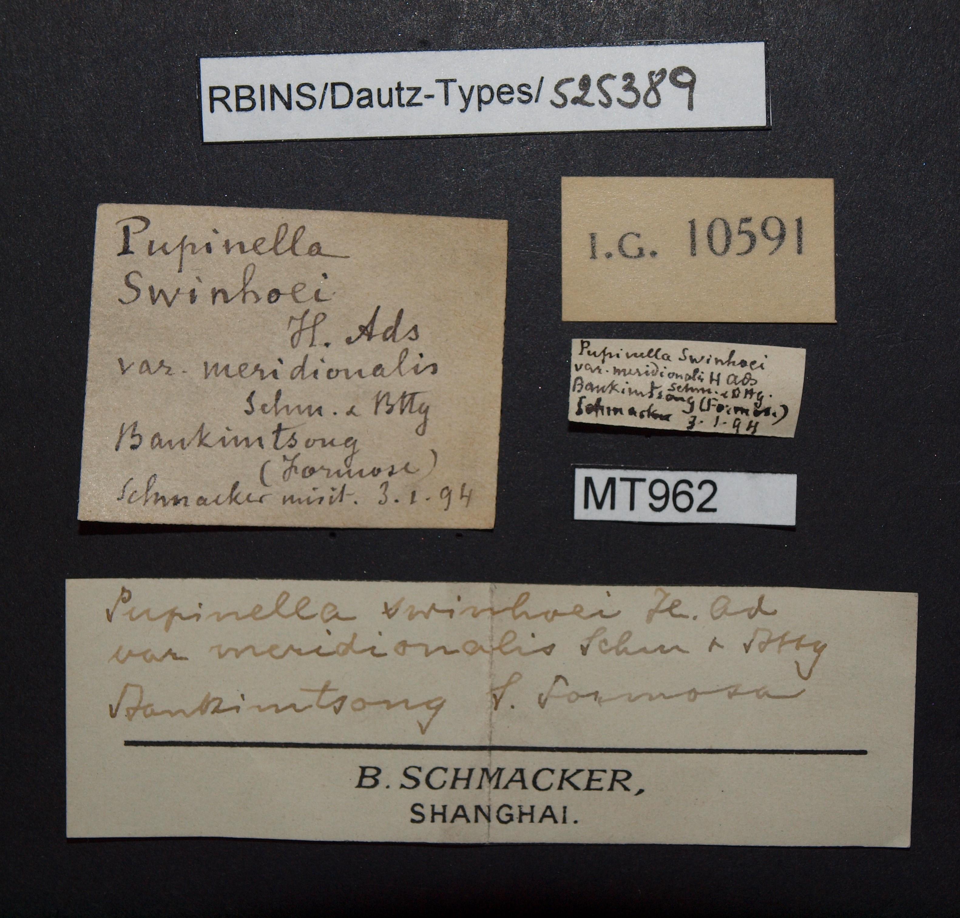 BE-RBINS-INV MT 962 Pupinella (Pupinopsis) swinhoei var. meridionalis pt Lb.jpg