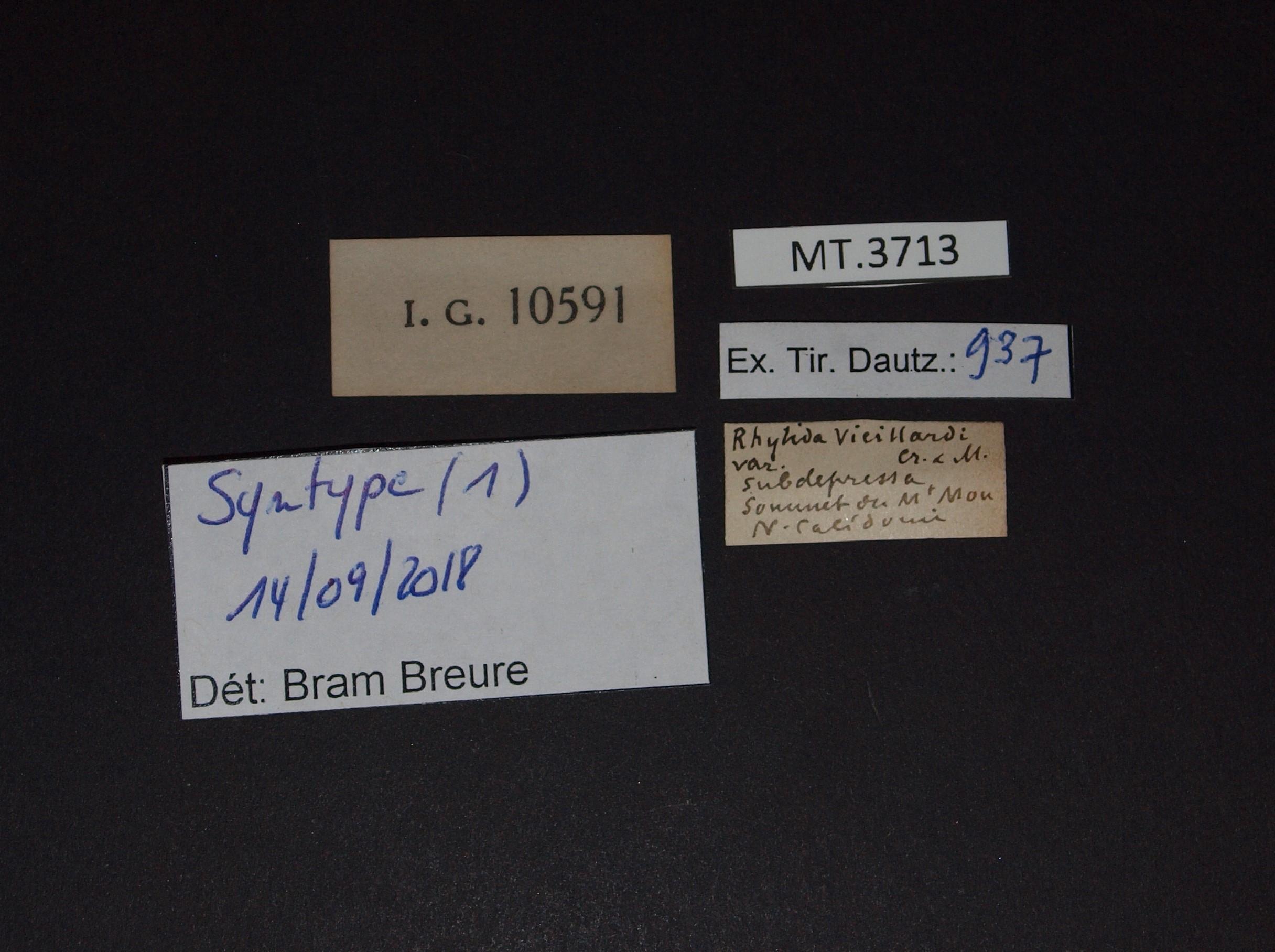 BE-RBINS-INV MT.3713 Rhytida vieillardi var. subdepressa LABELS.jpg