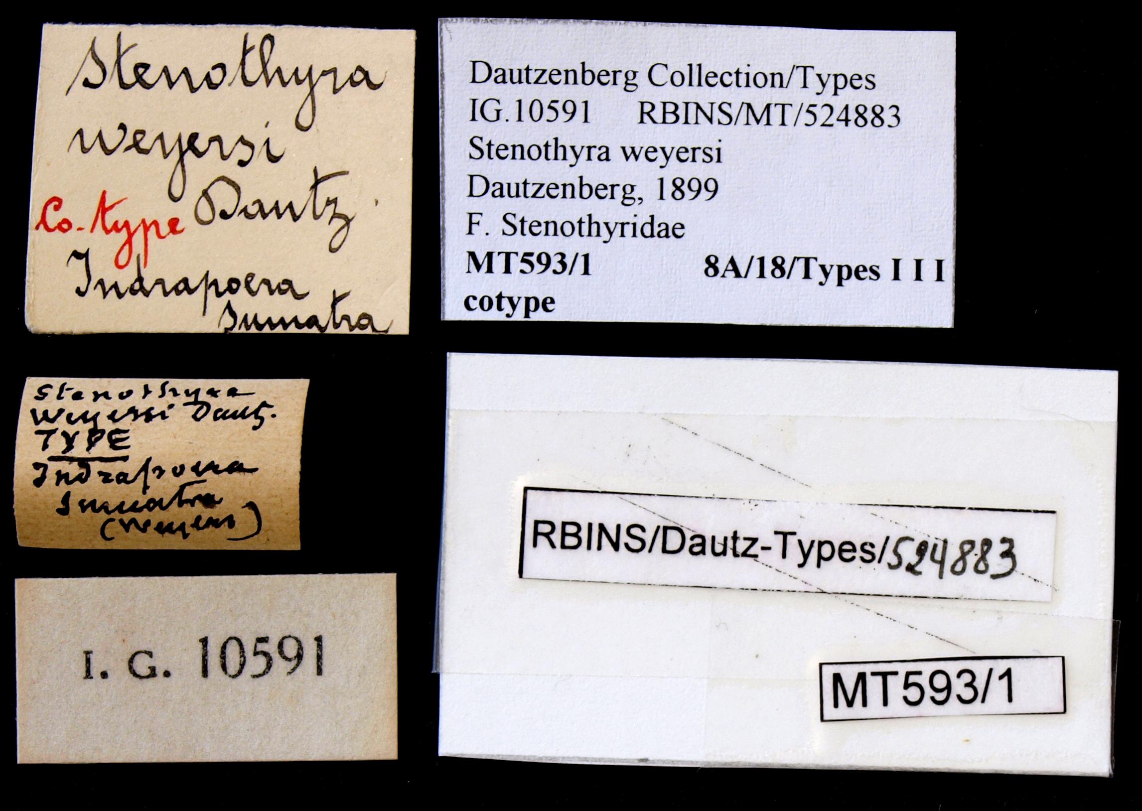 0593_1 Stenothyra weyersi Cotype Lb.JPG