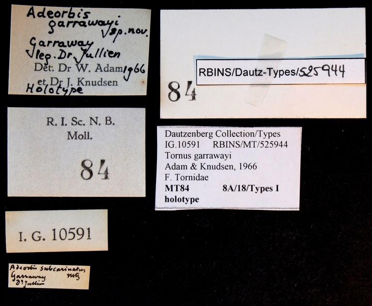 BE-RBINS-INV HOLOTYPE MT 84 Adeorbis garrawayi LABELS.jpg