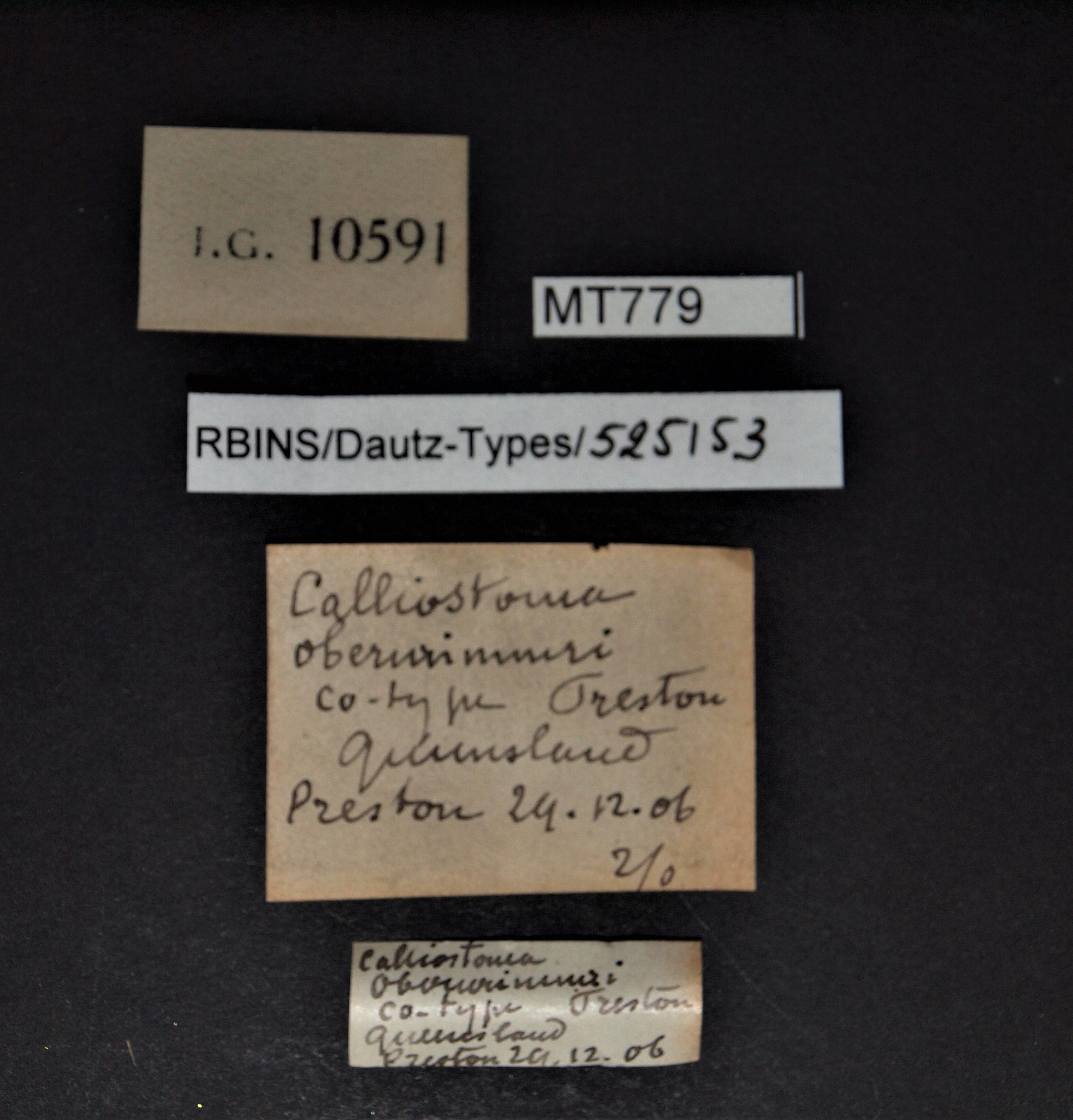 BE-RBINS-INV MT 779 Calliostoma oberwimmeri pt Lb.JPG
