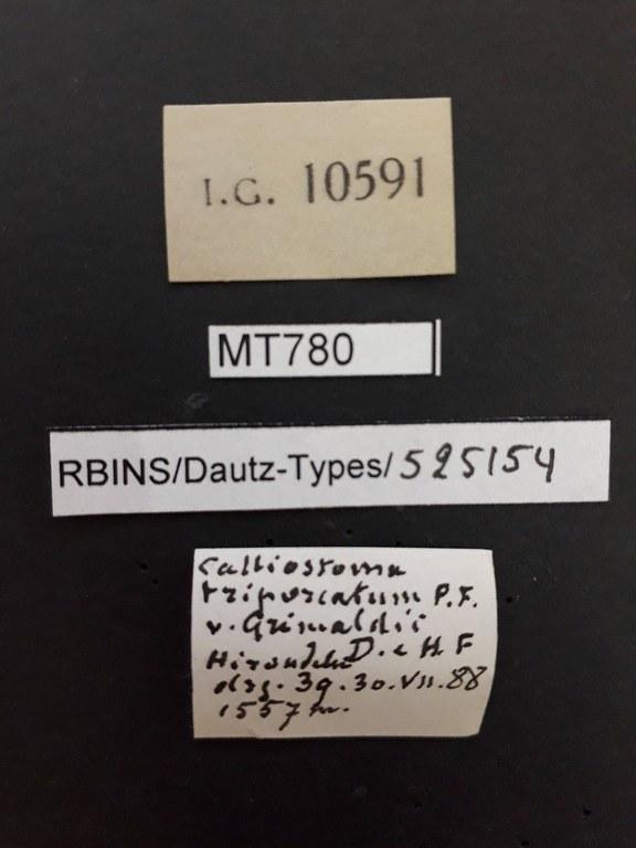 BE-RBINS-INV PARATYPE MT 780 Calliostoma triporcatum var. grimaldii LABELS.jpg
