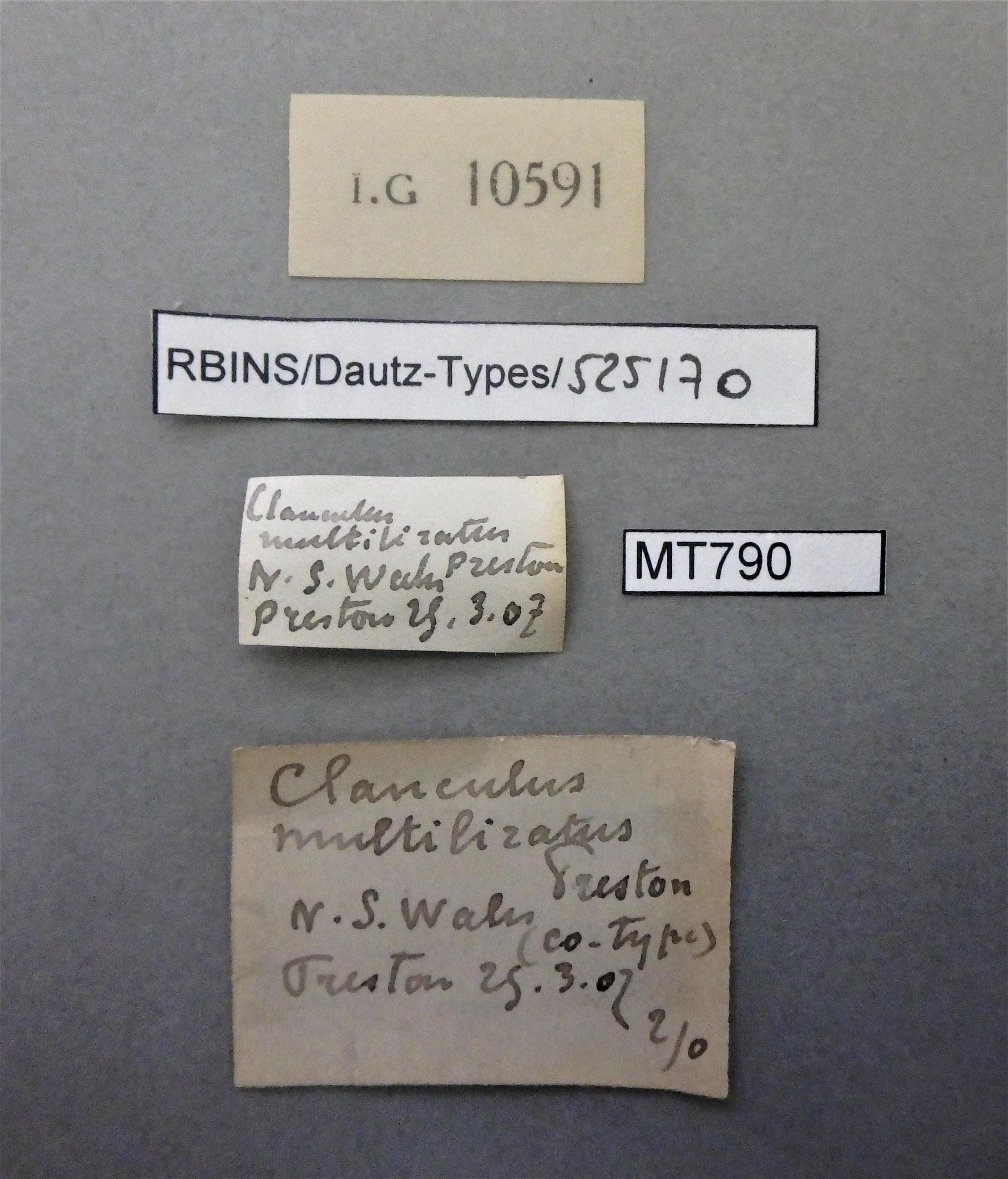 Clanculus multiliratus pt (ct).JPG