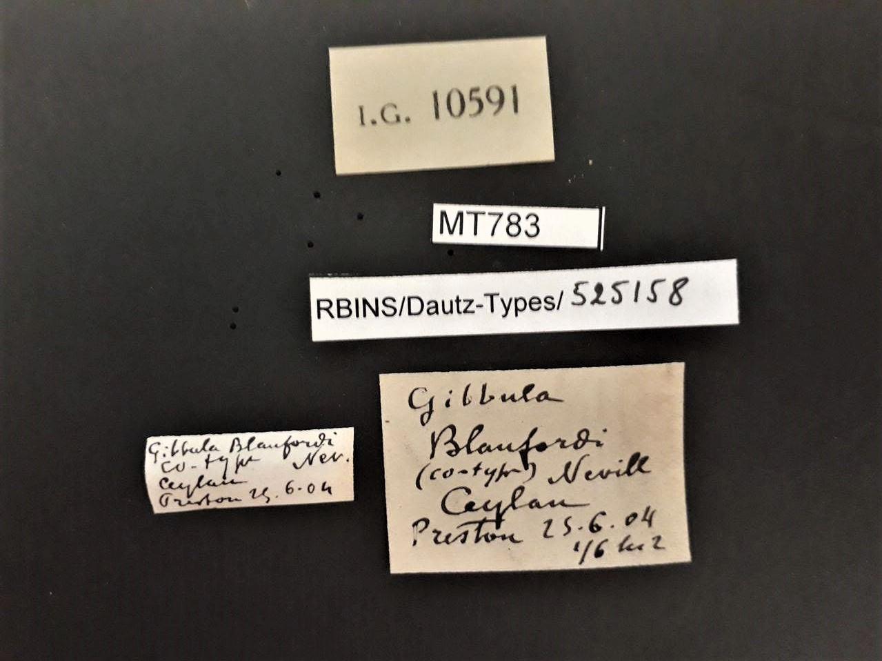 BE-RBINS-INV PARATYPE MT 783 Gibbula blanfordi LABELS.jpg