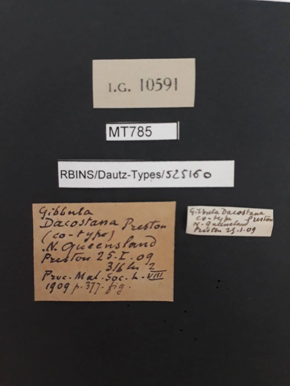BE-RBINS-INV MT 785 Gibbula dacostana pt Lb.jpg