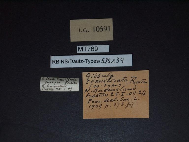 BE-RBINS-INV PARATYPE MT 769 Gibbula tenuilirata LABELS.jpg