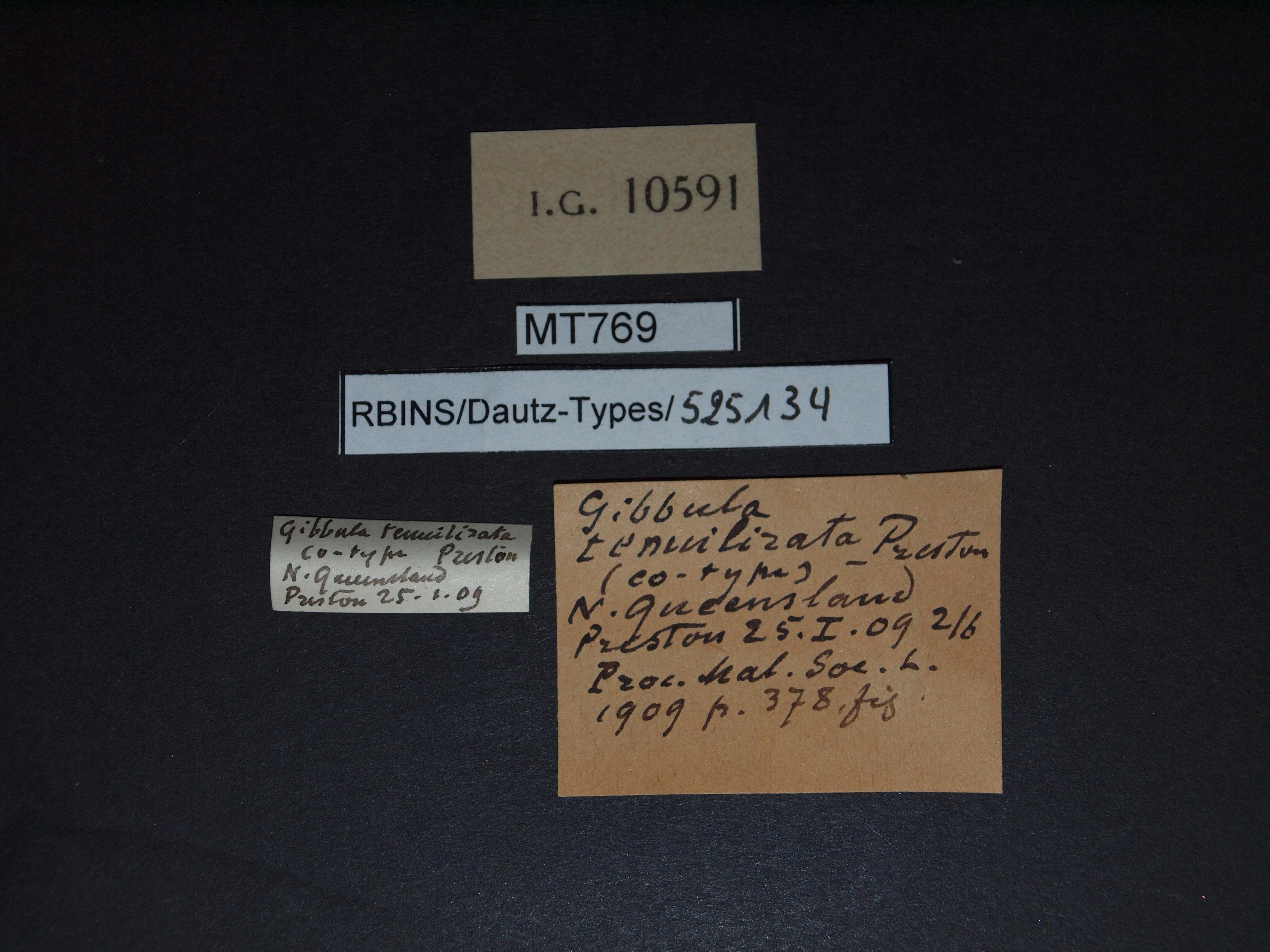 BE-RBINS-INV MT 769 Gibbula tenuilirata pt Lb.jpg