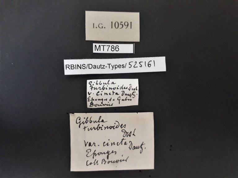 BE-RBINS-INV PARATYPE MT 786 Gibbula turbinoides var. cincta LABELS.jpg