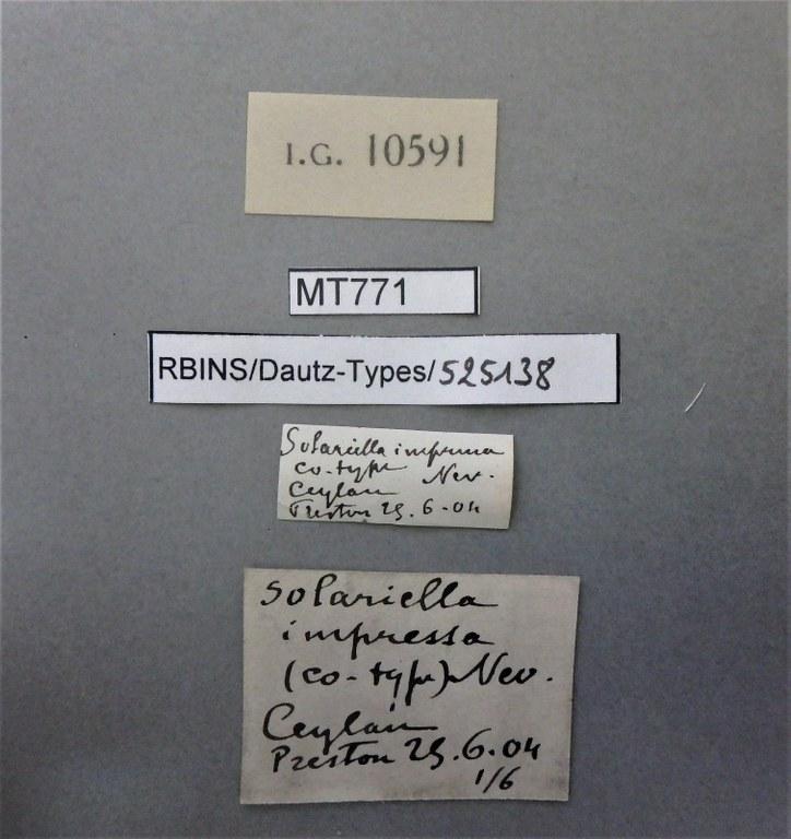 BE-RBINS-INV PARATYPE MT 771 Solariella impressa LABELS.jpg