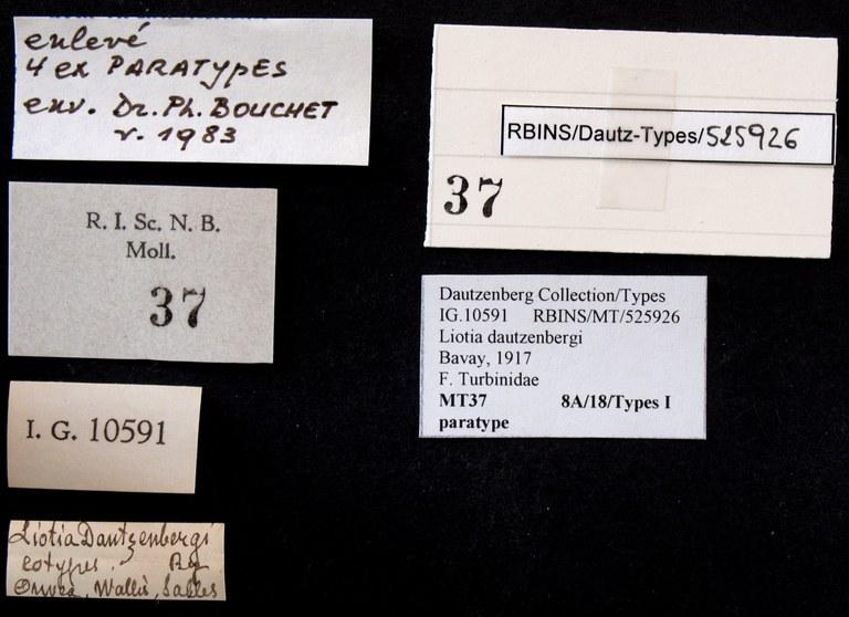 BE-RBINS-INV PARATYPE MT 37 Liotia dautzenbergi LABELS.jpg