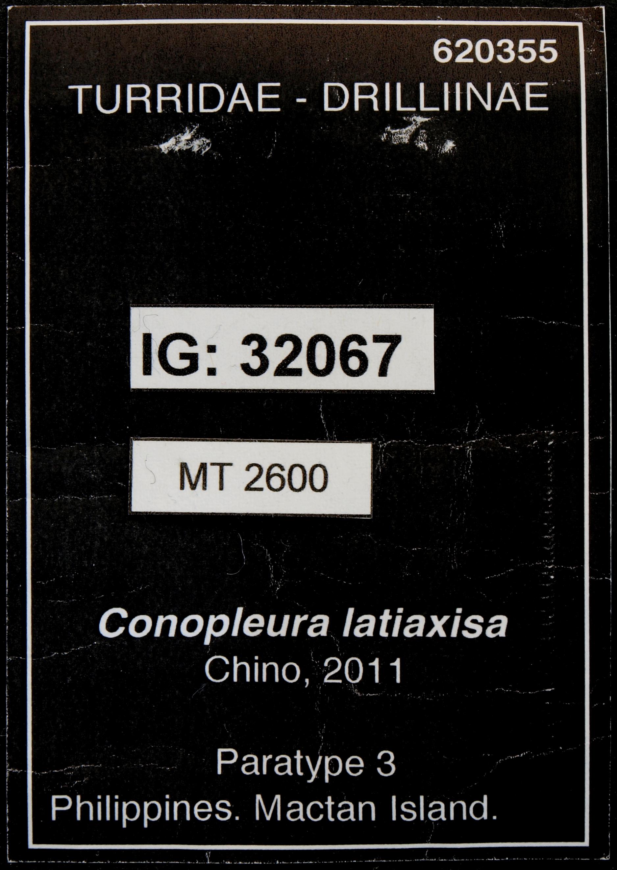 BE-RBINS-INV MT.2600 Conopleura latiaxisa pt Lb.JPG