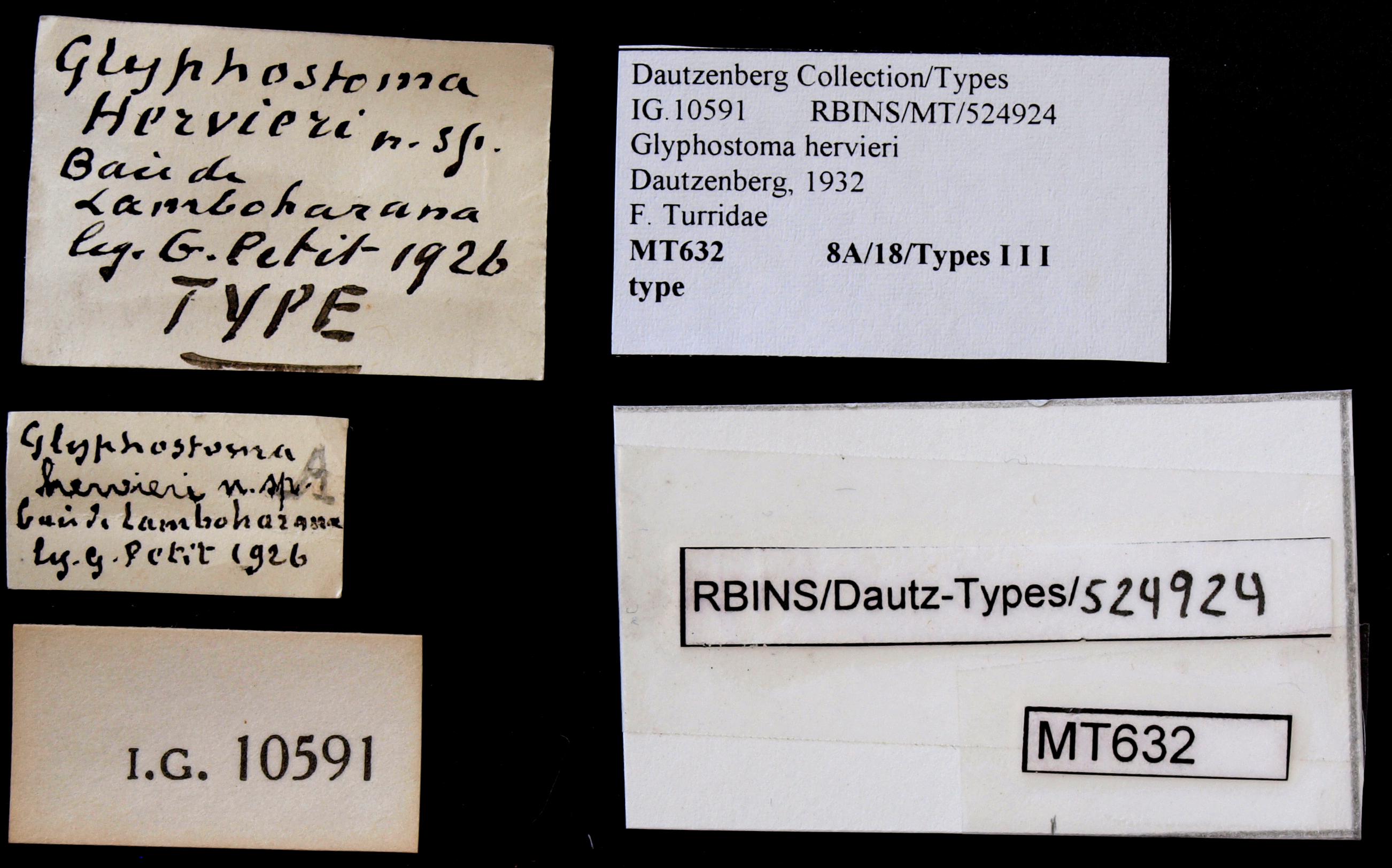 BE-RBINS-INV TYPE MT 632 Glyphostoma hervieri LABELS.jpg