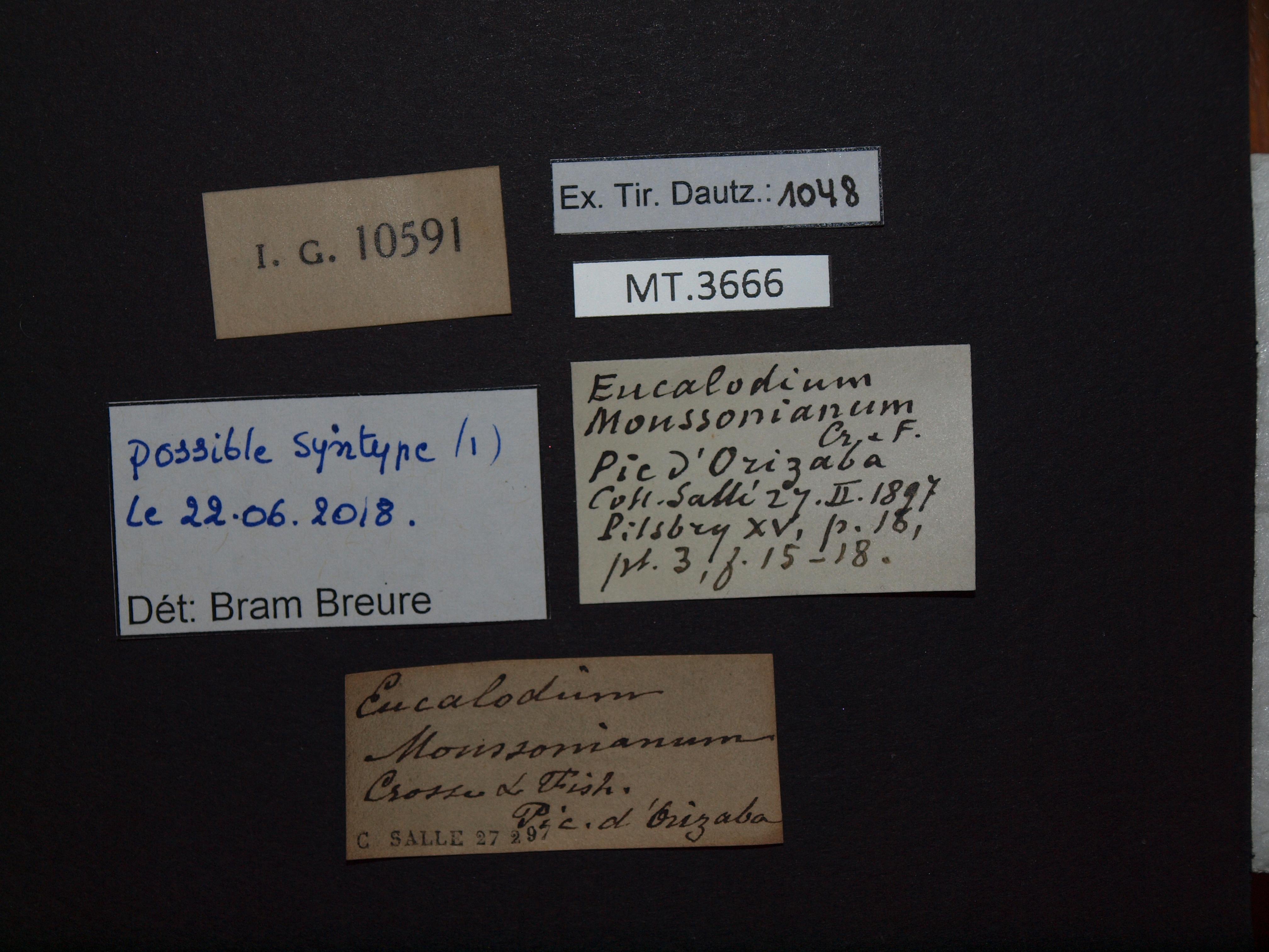 BE-RBINS-INV MT.3666 Eucalodium (Oligostylus) moussonianum st Lb.jpg