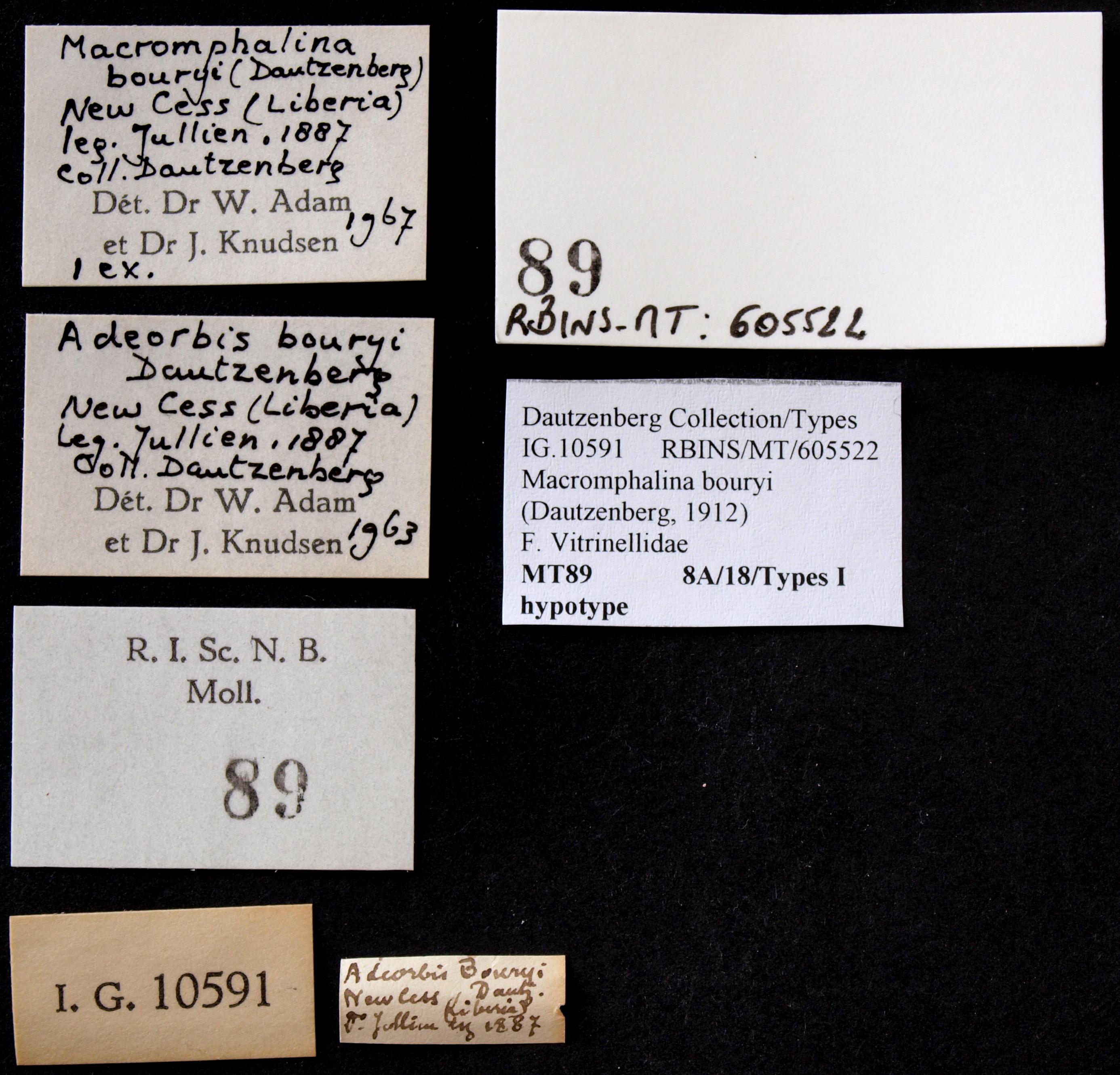 0089 Macromphalina bouryi Hyp Lb.JPG
