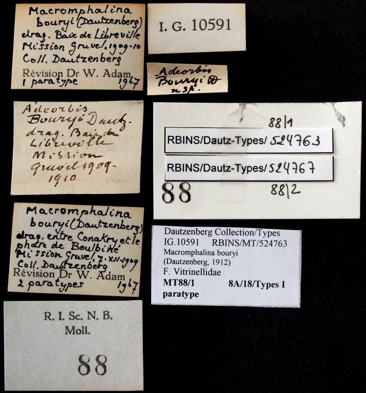 BE-RBINS-INV PARATYPE MT.88/2 Adeorbis bouryi LABELS.jpg