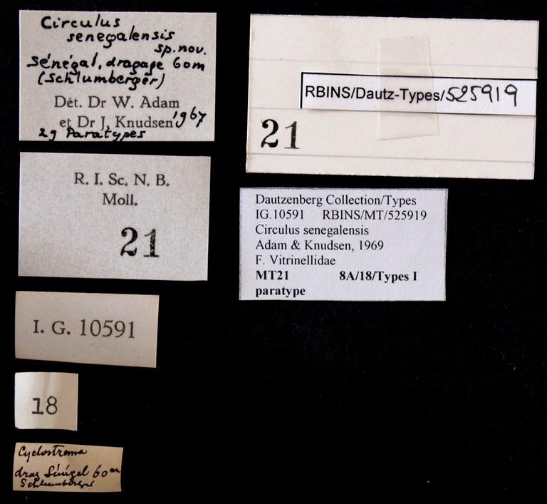 BE-RBINS-INV PARAYPE MT 21 Circulus senegalensis LABELS.jpg