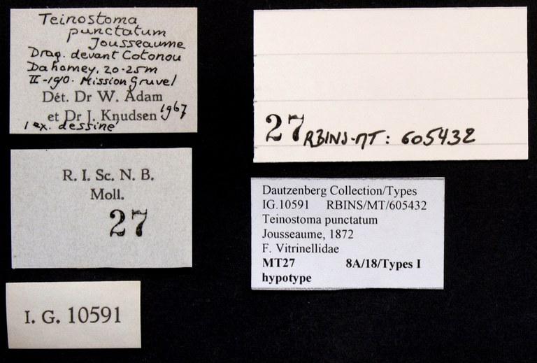 BE-RBINS-INV HYPOTYPE MT 27 Teinostoma punctatum LABELS.jpg