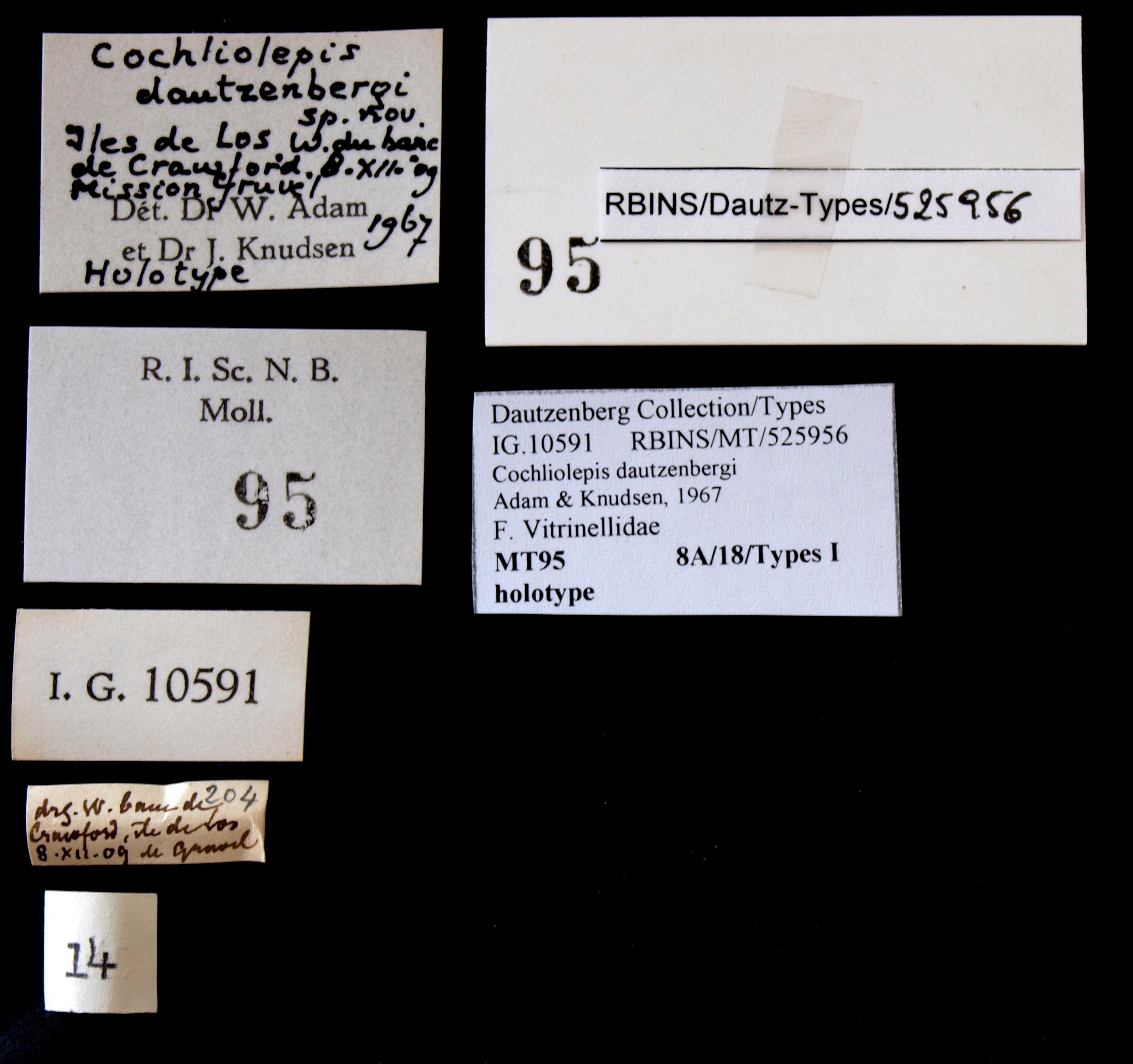 0095 Cochliolepis dautzenberghi Ht Lb.JPG