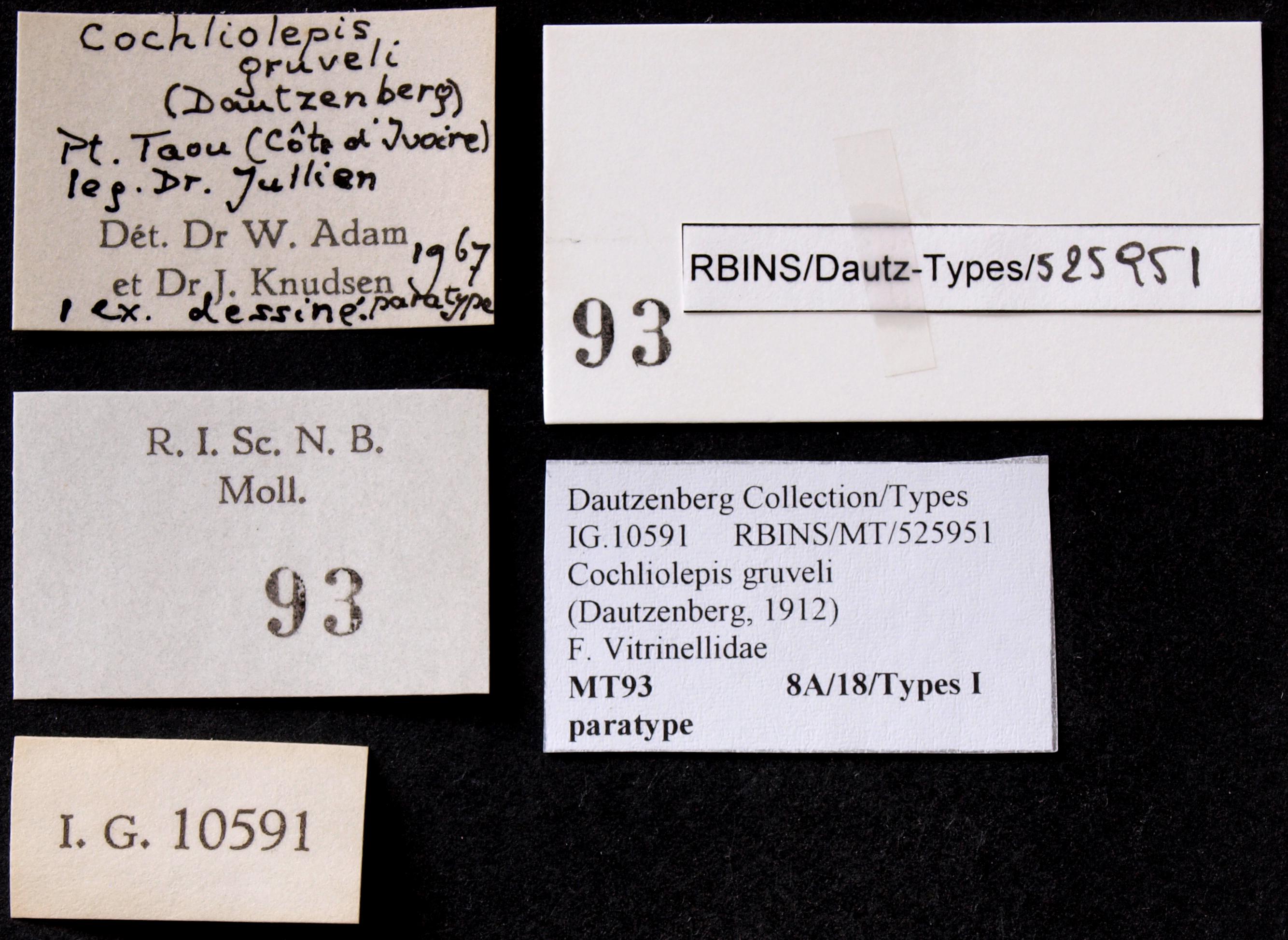 BE-RBINS-INV MT 93 Cochliolepis gruveli Pt Lb.JPG