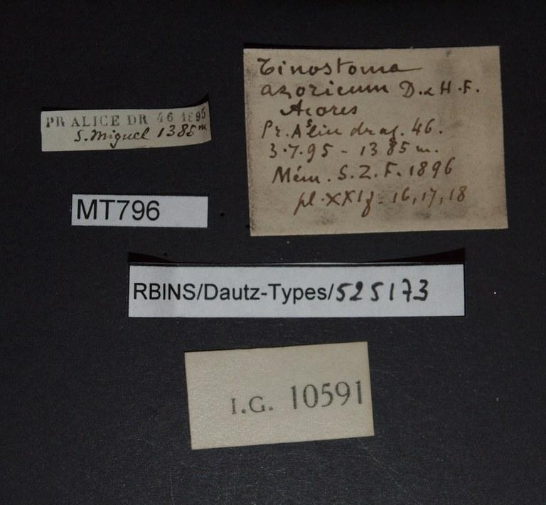 BE-RBINS-INV PARATYPE MT 796 Tenostoma azoricum LABELS.jpg