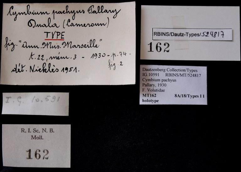 BE-RBINS-INV HOLOTYPE MT 162 Cymbium pachius LABELS.jpg