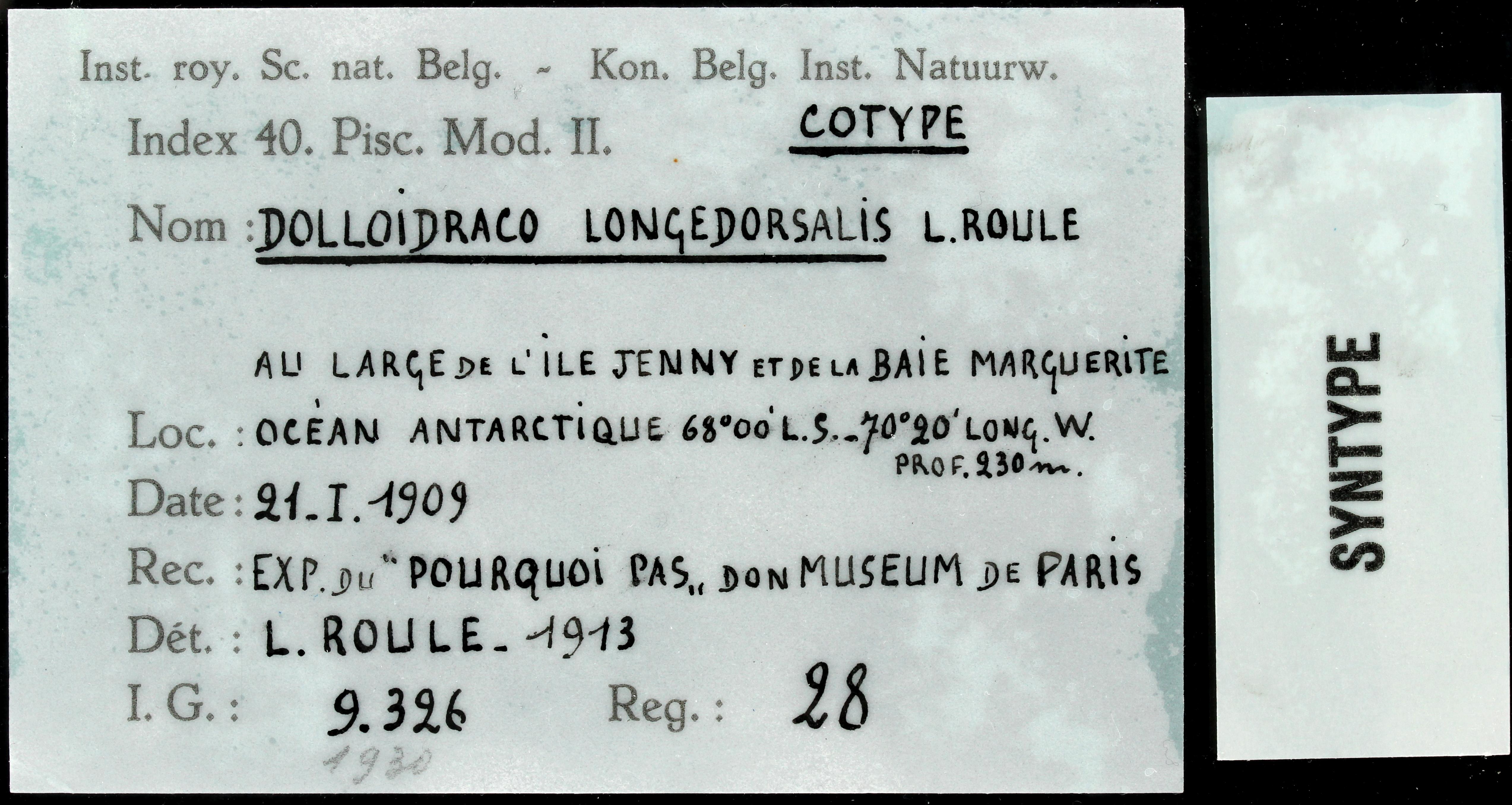 28 Dolloidraco longedorsalis 9326 ticket.JPG