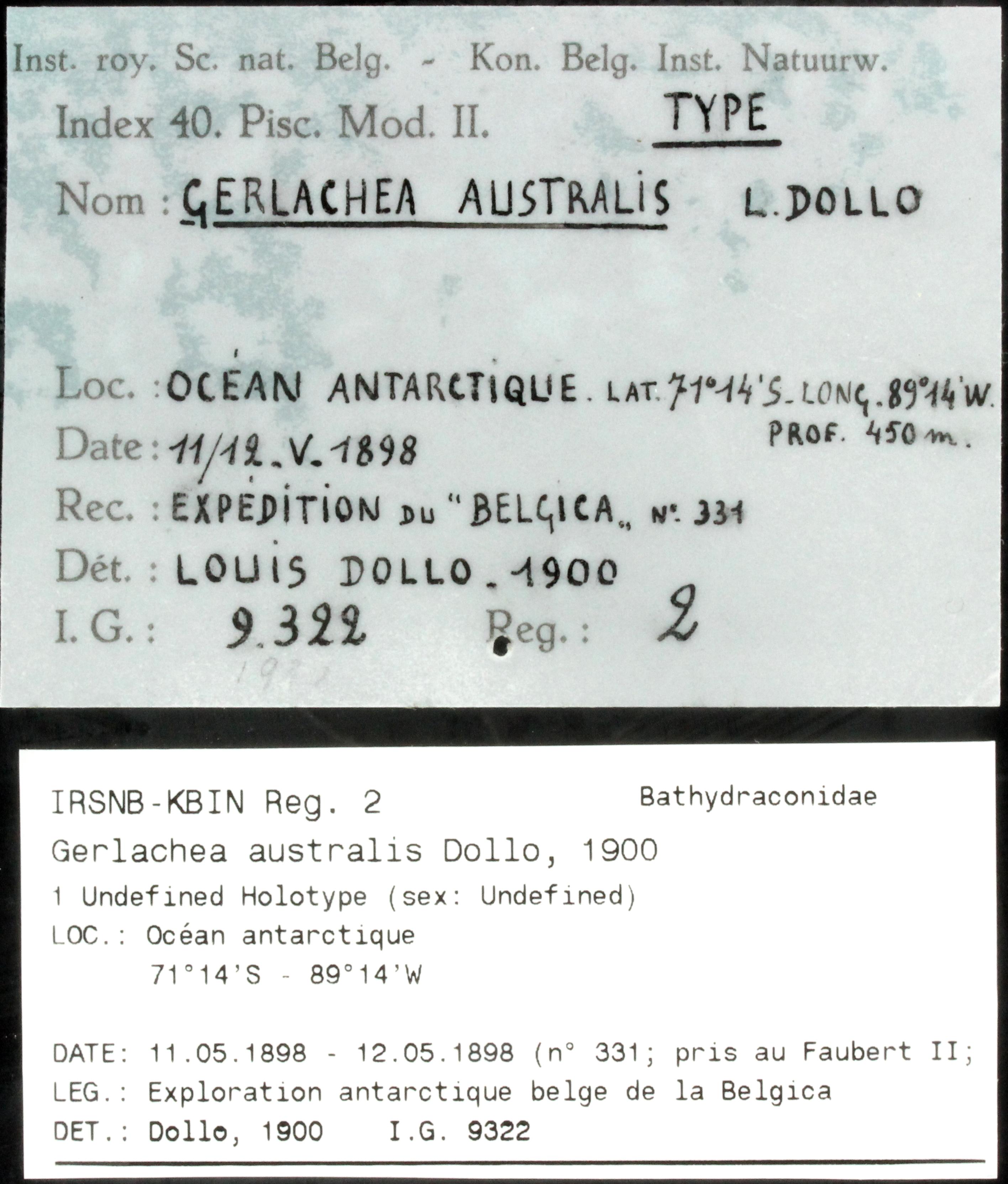 2 Gerlachea australis 9322 ticket.JPG