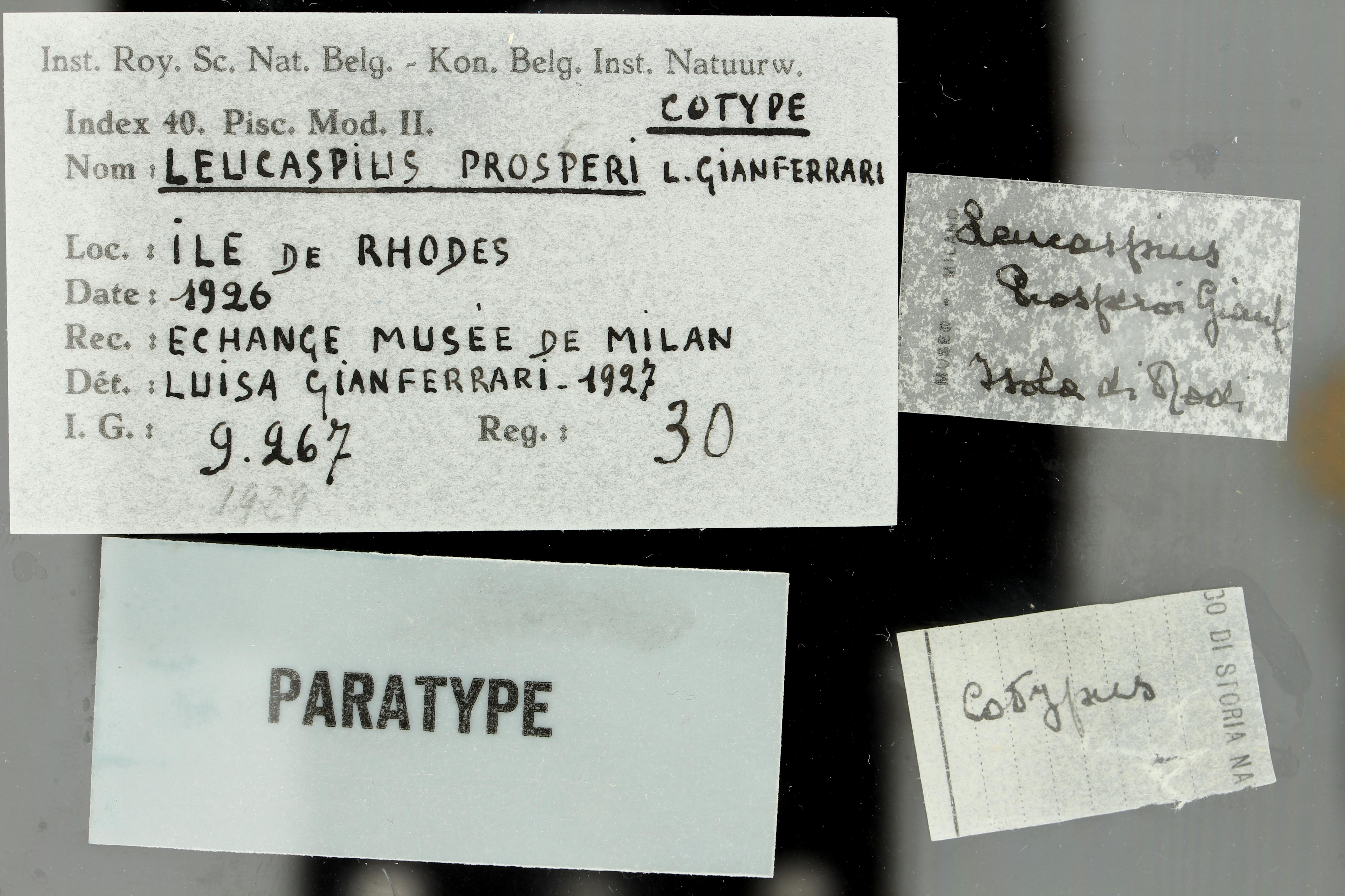30 Leucaspius prosperi 9267 ticket.jpg